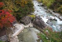新穂高の湯と蒲田川の紅葉 26120042092| 写真素材・ストックフォト・画像・イラスト素材|アマナイメージズ
