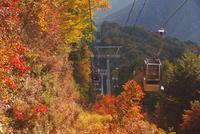 富士見台高原ロープウェイの秋
