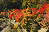 もみじ湖の紅葉