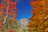 錫杖岳と紅葉 26120042134| 写真素材・ストックフォト・画像・イラスト素材|アマナイメージズ