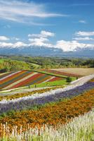四季彩の丘と十勝岳連峰の秋 26120042150| 写真素材・ストックフォト・画像・イラスト素材|アマナイメージズ