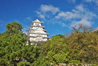 姫路城の秋 26120042186| 写真素材・ストックフォト・画像・イラスト素材|アマナイメージズ