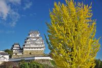 姫路城の秋 26120042191| 写真素材・ストックフォト・画像・イラスト素材|アマナイメージズ