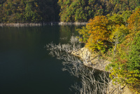 徳山湖の秋 26120042261| 写真素材・ストックフォト・画像・イラスト素材|アマナイメージズ