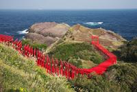元乃隅稲成神社と日本海 26120042563| 写真素材・ストックフォト・画像・イラスト素材|アマナイメージズ