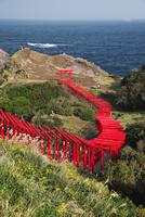 元乃隅稲成神社と日本海 26120042566| 写真素材・ストックフォト・画像・イラスト素材|アマナイメージズ