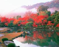 紅葉の天龍寺曹源池と嵐山