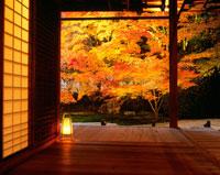 紅葉の天授庵庭園のライトアップ