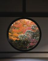 紅葉の源光庵「悟りの窓」 26121003442  写真素材・ストックフォト・画像・イラスト素材 アマナイメージズ