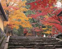 紅葉の湖東三山西明寺 26121003465| 写真素材・ストックフォト・画像・イラスト素材|アマナイメージズ