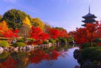 紅葉の東寺 五重塔