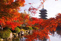 紅葉の東寺 五重塔 26121005510| 写真素材・ストックフォト・画像・イラスト素材|アマナイメージズ