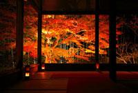 紅葉ライトアップの大原宝泉院 額縁庭園