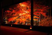 紅葉ライトアップの大原宝泉院 額縁庭園 26121005552  写真素材・ストックフォト・画像・イラスト素材 アマナイメージズ