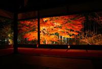 紅葉ライトアップの大原宝泉院 額縁庭園 26121005554  写真素材・ストックフォト・画像・イラスト素材 アマナイメージズ