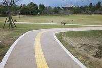 奈良公園の鹿と視覚障害者の進路誘導のタイル