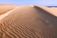 鳥取砂丘と風紋 26121008260| 写真素材・ストックフォト・画像・イラスト素材|アマナイメージズ
