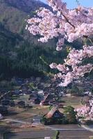 新緑と桜の白川郷合掌村 26121010444| 写真素材・ストックフォト・画像・イラスト素材|アマナイメージズ