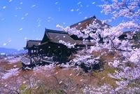 桜の清水寺舞台と京都市街 26121010534| 写真素材・ストックフォト・画像・イラスト素材|アマナイメージズ