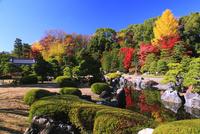 紅葉の二条城清流園