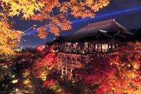 紅葉のライトアップの清水寺舞台