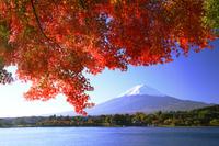 モミジと富士山 26121013293  写真素材・ストックフォト・画像・イラスト素材 アマナイメージズ