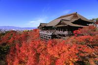 紅葉の清水寺舞台 26121014370  写真素材・ストックフォト・画像・イラスト素材 アマナイメージズ