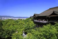 新緑の清水寺 26121015327| 写真素材・ストックフォト・画像・イラスト素材|アマナイメージズ