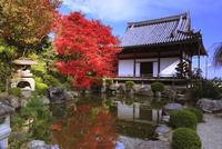 紅葉の善峯寺