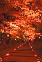 ライトアップの毘沙門堂の参道