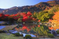 紅葉の天龍寺の庭園