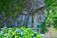 アジサイの咲く玄武洞公園