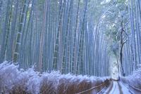 雪の嵯峨の竹林
