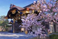 桜の二条城