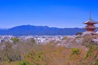 サクラの咲く清水寺 26121024513| 写真素材・ストックフォト・画像・イラスト素材|アマナイメージズ