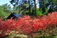ツツジの咲く御屋敷公園