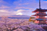 富士山とサクラと五重塔