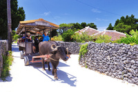 竹富島の家並みと水牛