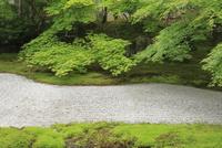 天授庵 26121028307| 写真素材・ストックフォト・画像・イラスト素材|アマナイメージズ