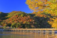 秋の嵐山 26121028519| 写真素材・ストックフォト・画像・イラスト素材|アマナイメージズ