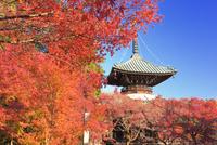 紅葉の清凉寺