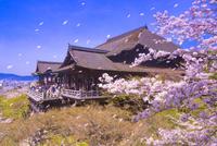 サクラの咲く清水寺 26121030332| 写真素材・ストックフォト・画像・イラスト素材|アマナイメージズ