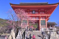 早春の清水寺 26121030565| 写真素材・ストックフォト・画像・イラスト素材|アマナイメージズ