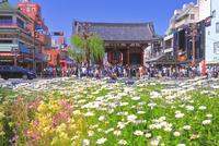 浅草寺の雷門 26121030969  写真素材・ストックフォト・画像・イラスト素材 アマナイメージズ