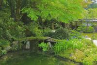新緑の金剛輪寺 26121031288  写真素材・ストックフォト・画像・イラスト素材 アマナイメージズ