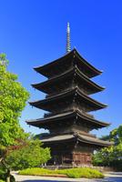 新緑の東寺 26121031388  写真素材・ストックフォト・画像・イラスト素材 アマナイメージズ