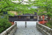 新緑の祇園