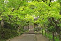 新緑の常寂光寺 26121031456  写真素材・ストックフォト・画像・イラスト素材 アマナイメージズ
