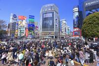 渋谷のスクランブル交差点 26121031481| 写真素材・ストックフォト・画像・イラスト素材|アマナイメージズ