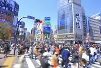 渋谷のスクランブル交差点 26121031489| 写真素材・ストックフォト・画像・イラスト素材|アマナイメージズ